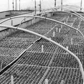 """""""Histoire des Pépinières Renault"""" : saviez-vous que les pépinières Renault ont commencé dès 1976 la production de bruyères, qui deviendra dans les années 80 une culture importante de l'entreprise dû à une demande grandissante ? Aujourd'hui encore la pépinière est une référence lorsqu'il s'agit de bruyères, grâce à un assortiment de plus de 100 variétés différentes avec également nos propres variétés comme : Erica x darleyensis Winter Belles ® 'Lucie' et 'Tylou'. . . """"Pepinieres Renault History"""" : did you know that the nursery started from 1976 the production of heathers, that will become a major culture in the 80s of our company thanks to high demand at that time ? Today we are still a reference when it comes to heathers, thanks to a collection of over 100 different varieties with also our own varieties such as : Erica x darleyensis Winter Belles ® 'Lucie' and 'Tylou'. . #nursery #pepinieres #archives #heathers #bruyeres #history"""
