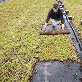 Depuis les années 1990, les Pepinieres Renault se sont spécialisées dans la production des sédums pour la végétalisation des toitures et terrasses. Tous les ans, nous produisons environ 18000m2 de tapis de sédums.  Expédition dans toute la France  #toitsvegetalises #toituresvégétalisées #sedum #designurbain #tapis #sedumblankets #tapisdesedum #pepinieres #paysage