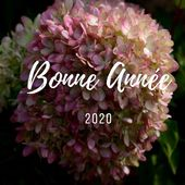 Les Pépinières Renault vous souhaite une bonne annėe 2020 ! . Happy New Year from all of us at Pepinieres Renault ! . Photo : Hydrangea Paniculata Romantic Ace® (création 2019) . #2020 #newyear #pepinieresrenault #nursery #plantaddict #hydrangea #paniculata
