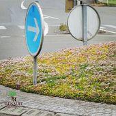 Un exemple de végétalisation urbaine réalisé par les Pépinières Renault. Un aménagement écologique qui s'intègre au paysage urbain  #pepinieres #renault #sedum #espacesverts #rondpoint #ecologie #paysage #designurbain