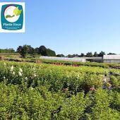 Aujourd'hui, nous voulions vous parler du label Plante Bleue. Ce label national de référence pour les professionnels de l'horticulture, garantit officiellement que les végétaux ont été produits de manière éco-responsable par des entreprises de production horticoles françaises. Les Pépinières Renault après audit ont été évaluées et jugées conformes au référentiel technique de la certification horticole Plante Bleue (Niveau 2). Today, let's talk about Plante Bleue Label. This label is a trusted national label for horticultural professionals. It officially guarantees that plants have been produced in an eco-friendly manner from French horticultural producers' companies. After an audit, Pepinieres Renault has been evaluated and judged compliant to the technical reference document of the Plante Bleue certification (Level 2). #pepinieres #renault #ecofriendly